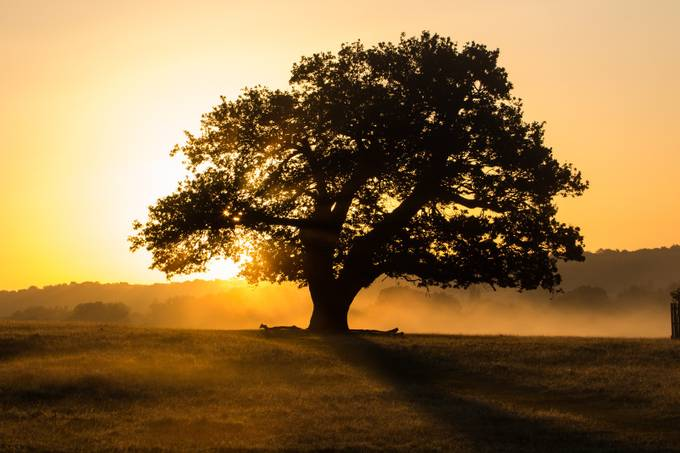 DeerRut2015-36 by TaffBackHome - Silhouettes Of Trees Photo Contest