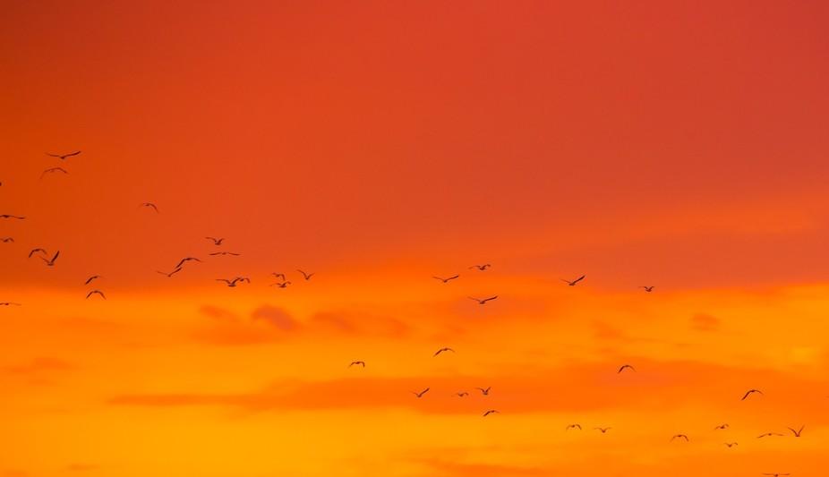 Get Flocked
