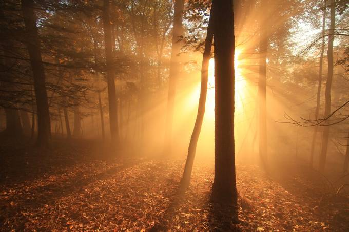 The Radiant by AaronShaver - Silhouettes Of Trees Photo Contest