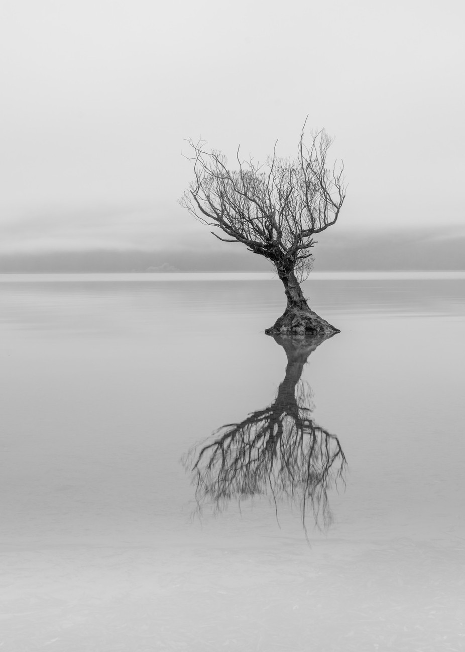 Alone by jamierichey - A Lonely Tree Photo Contest