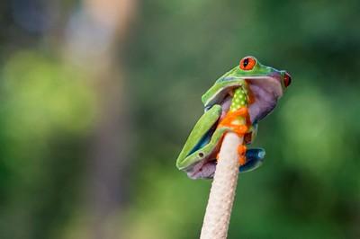 Frog 2_resize