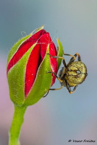 Uma mosca de olhos bonitos