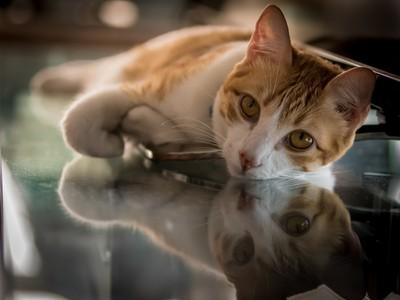 Lies Reflections