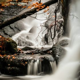 Orange Autumn leaves highlighted against the white waters of the falls at Fana, Bergen, Norway, October 2015.