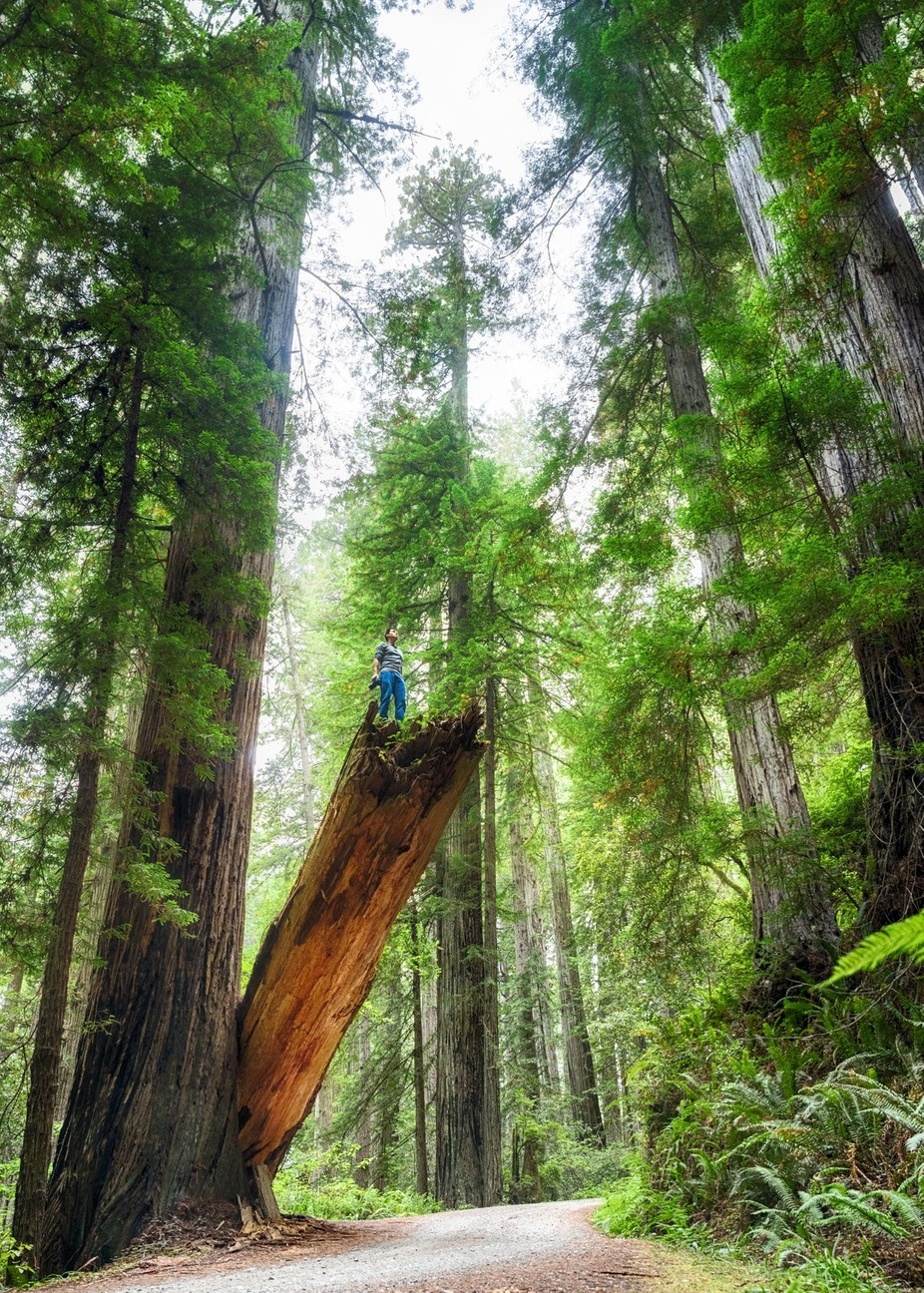 Among the Redwoods by emxsee - Adventure Land Photo Contest Outside Views