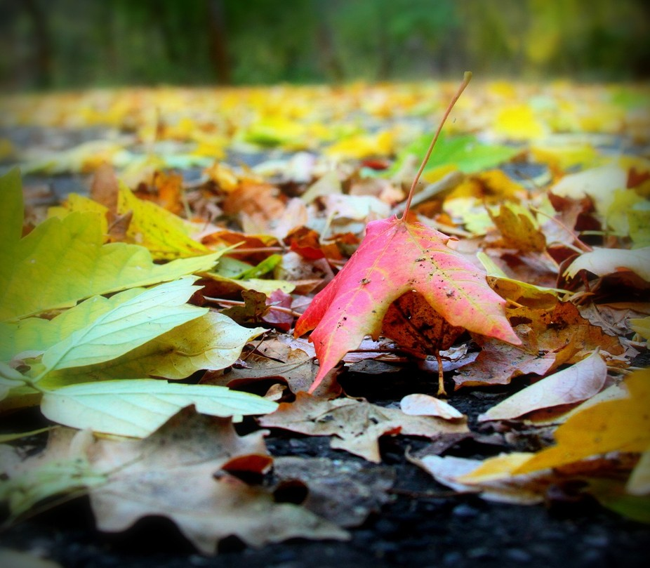Our Winter was dry this year, so our Fall this year is very short. Almost as fast as the color st...