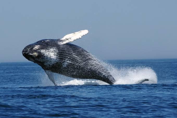 Cape Cod MA 8 by RobWaples - Big Mammals Photo Contest