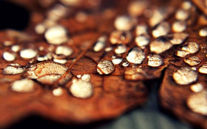 droplets of autumn  by SublimeExposures - Macro Water Drops Photo Contest