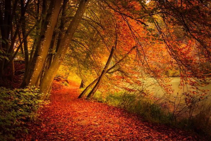 Autumn path by pierrecuony - Fall 2016 Photo Contest