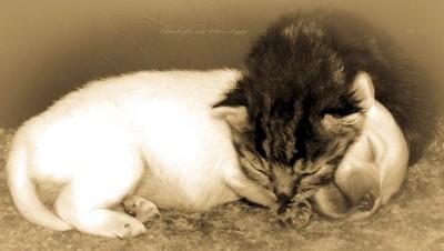 Kitty & Doggy