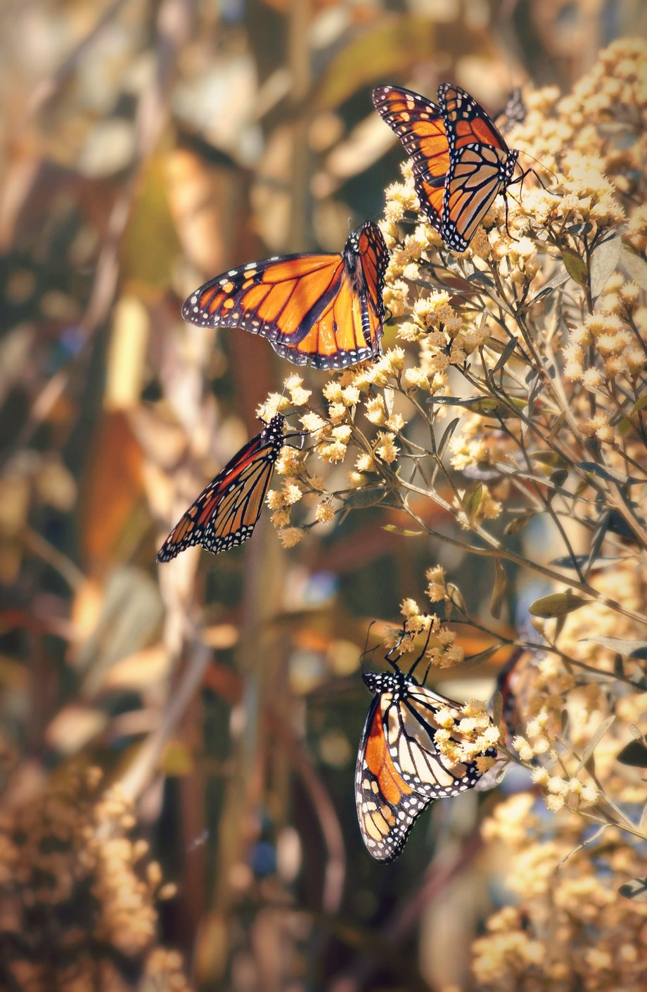 Monarchs Gathering by KatieMcKinneyPhotography - Beautiful Butterflies Photo Contest