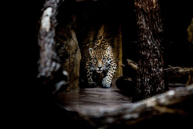 Jag by tylerfisher - Image of the Year Photo Contest by Snapfish
