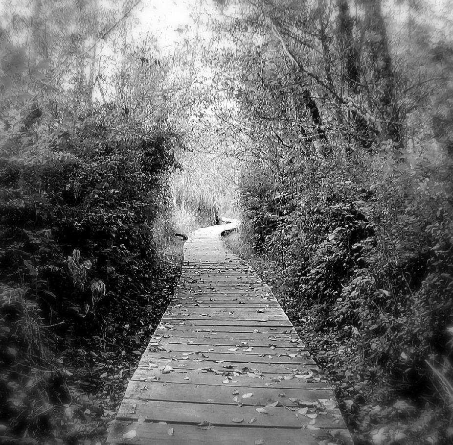 nature trail in millersylvania state park,wa state