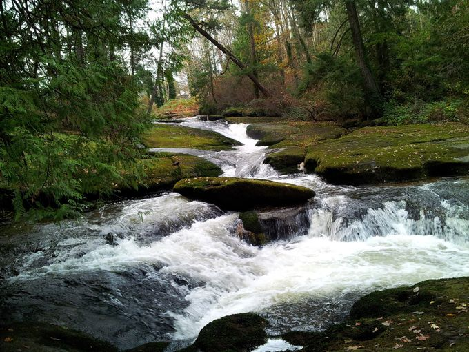 Luxury by jtwphotos - Streams In Nature Photo Contest