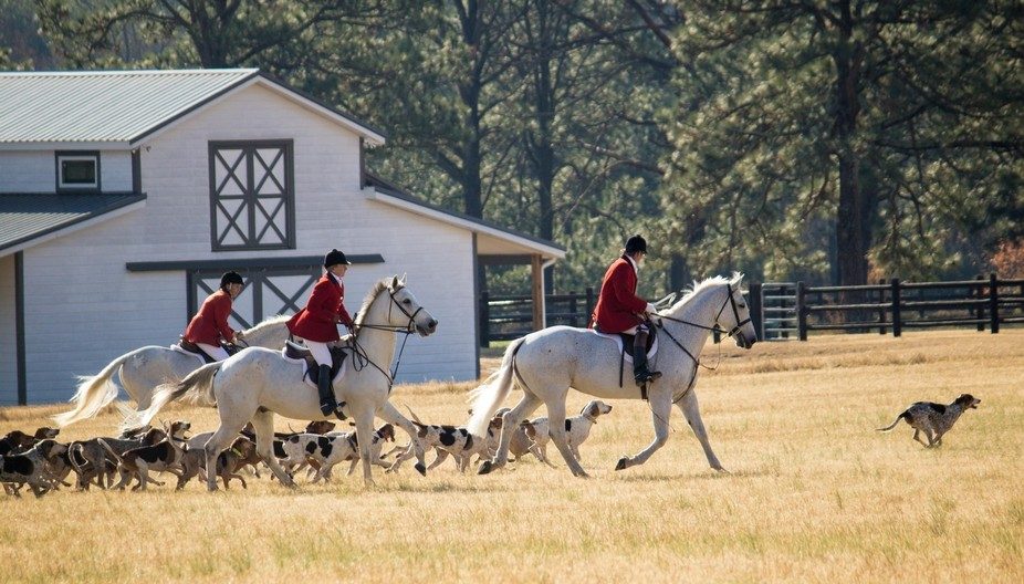 Annual Blessing of the Hounds fox hunt.