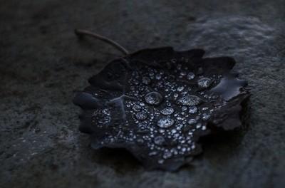 Grandma's leaf