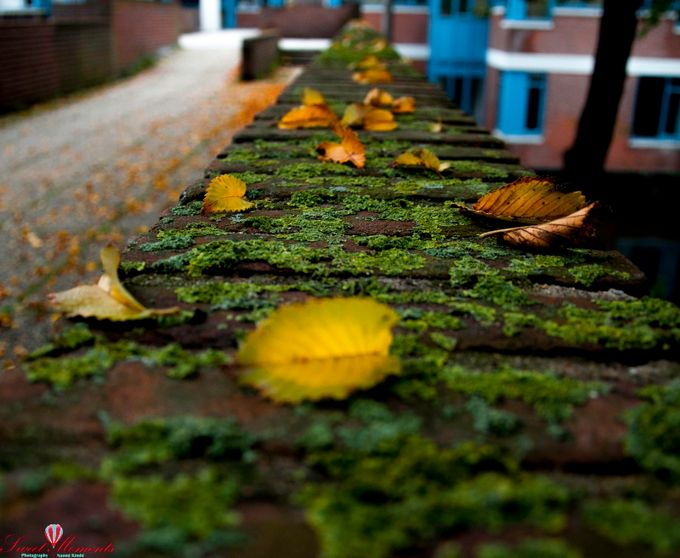 Leaf of fall by naomikimhi - Clever Angles Photo Contest