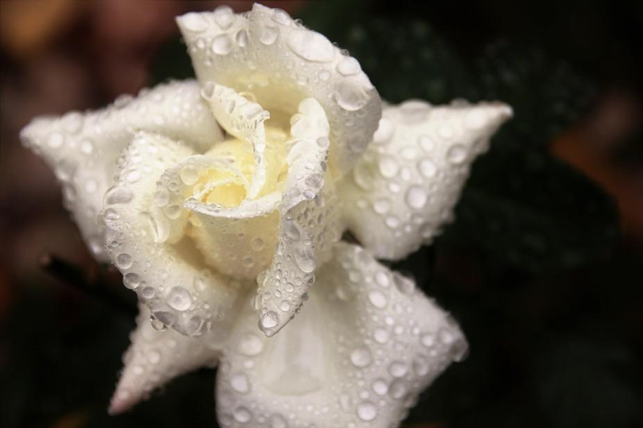 Fleur de Leur