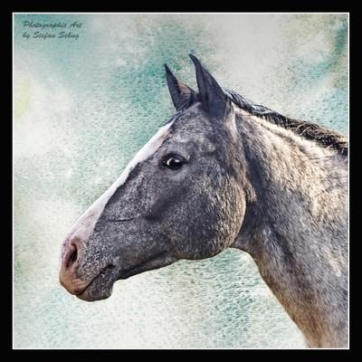 Horse Portrait!