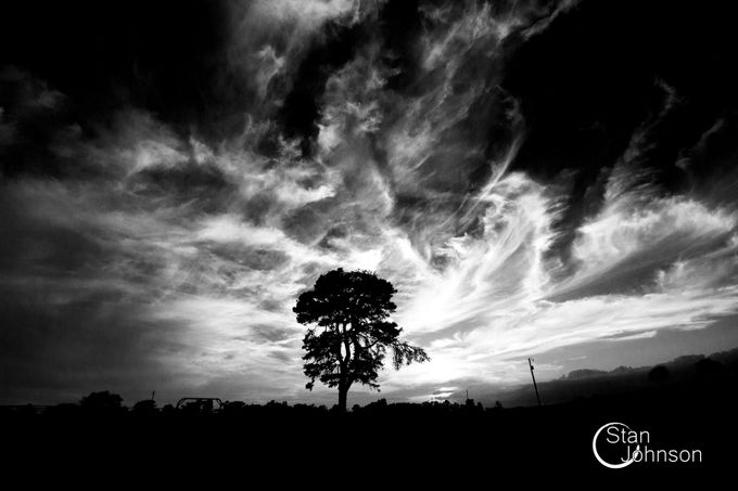 contrast by stanleyjohnson - Silhouettes Of Trees Photo Contest