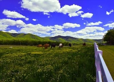 Huttonsville Horses