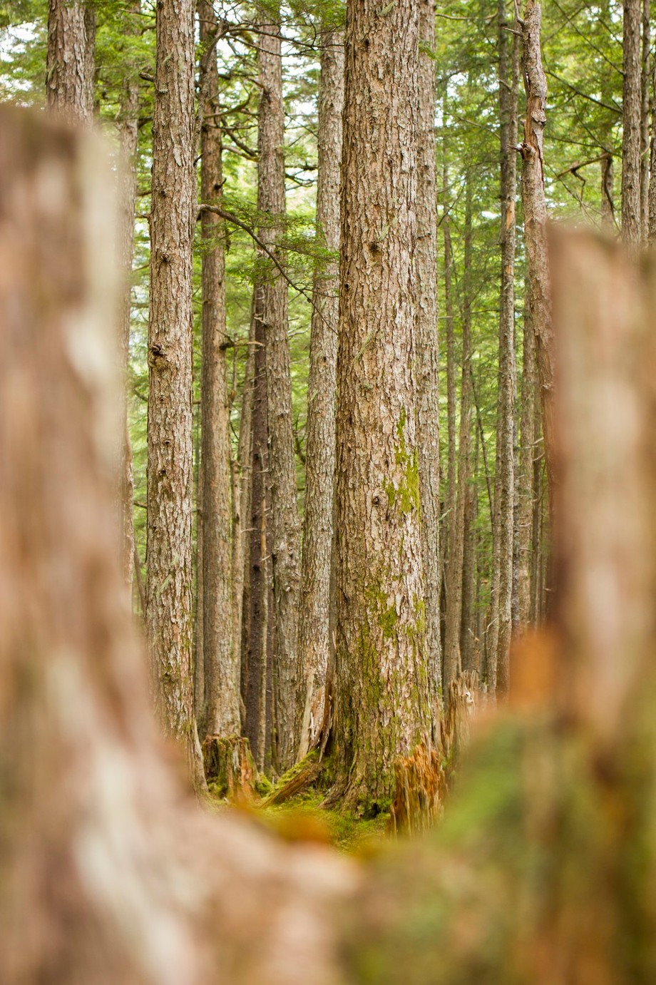 See the Forest for the Trees by ChelseaTracyPhotography - Shallow Depth Of Field Photo Contest