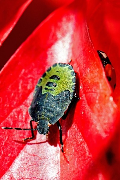 Two bugs one leaf