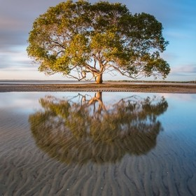 This stunning mangrove tree sits in the ocean at Beachmere, Queensland. I timed my image just after sunrise to illuminate my subject. A long expo...