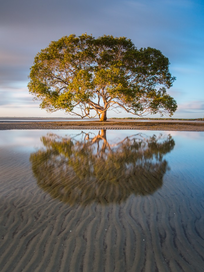 The tree in the sea by tomrexjessett - A Lonely Tree Photo Contest