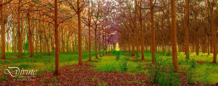 Spring at Richmond Plantation