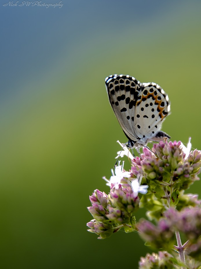 Springtime by NickSW - Beautiful Butterflies Photo Contest