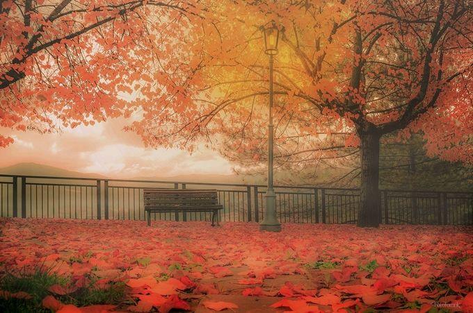 Foggy romance by Tomek - Fences Photo Contest