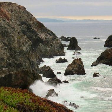 Bodega Head Trail CA