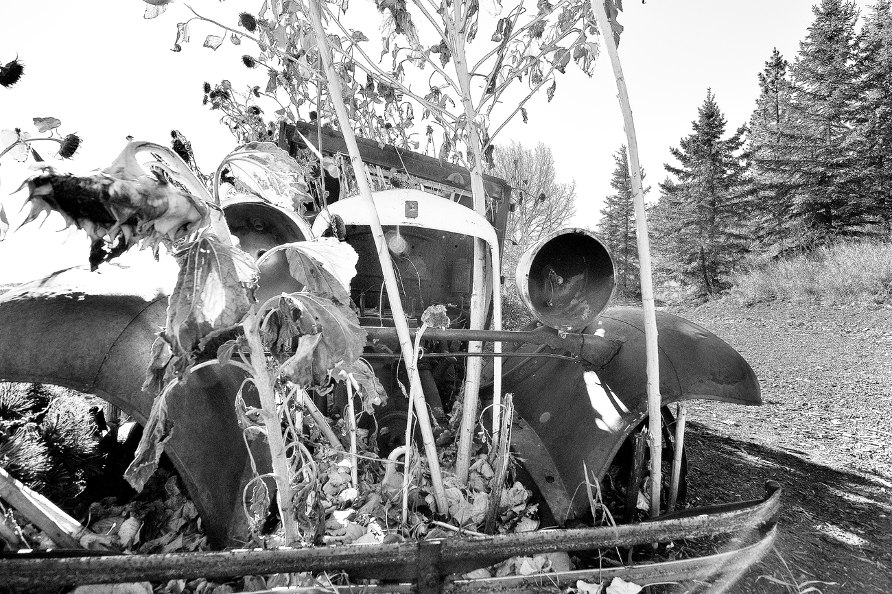 BW Front Grill of an Old Truck with Sunflowers