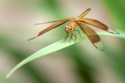 Dragon fly on leaf
