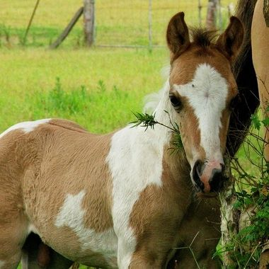Beautiful Foals