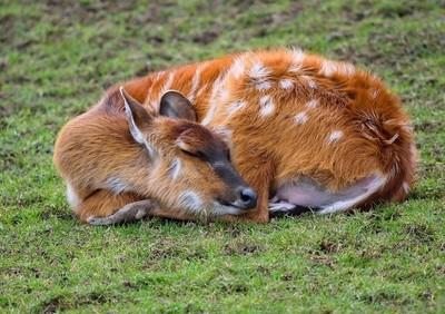 Peaceful nap