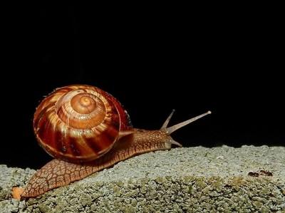 Snail Stop