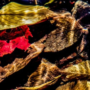 Autumn leaves in a Cataloochee creek, Great Smoky Mountains National Park