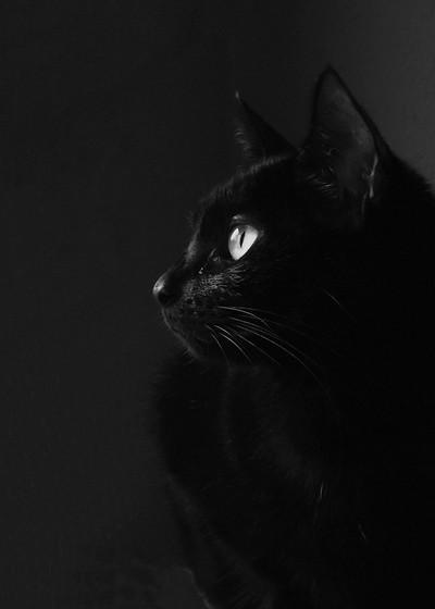 Gato de la Bruja