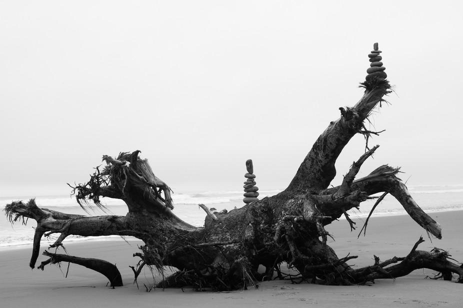 Coast Driftwood