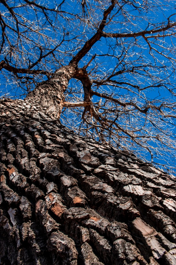 capillaries by caitw - Tall Trees Photo Contest
