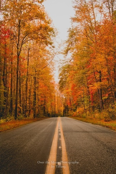 """""""Autumn Roads"""""""