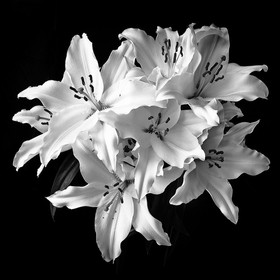 Black and white flower study