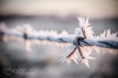 Barbed Serenity
