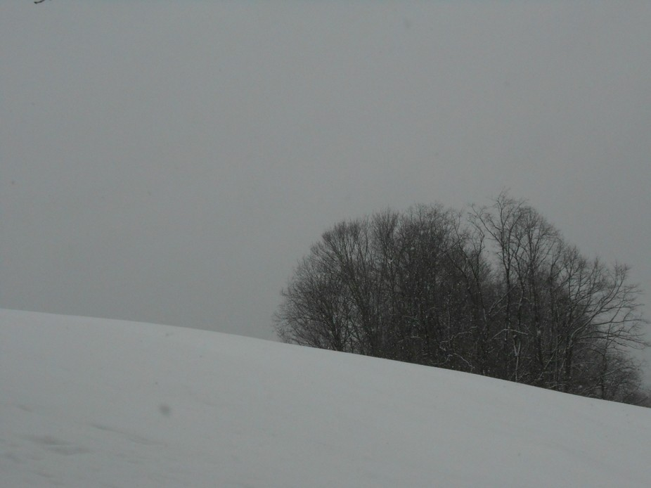grazing field during winter