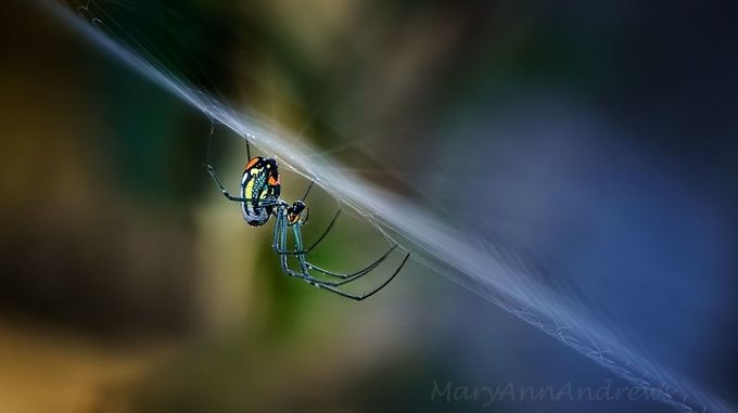 Along Came A Spider by MaryAnnAndrews - Composing with Diagonals Photo Contest