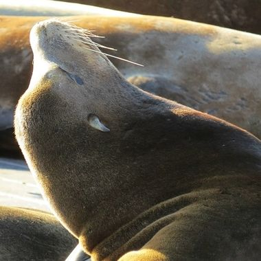 I loved the layers of Sea Lions and the lines it created as the sun shined on their backs.