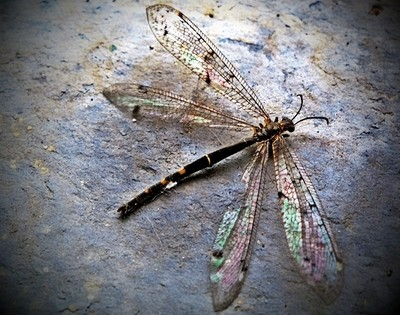 Dragonfly lost in the city