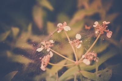 lil flowers